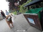 anjing_20170713_081827.jpg