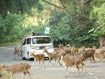 area-taman-safari-bogor.jpg