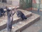 beruang-madu_20170118_203603.jpg