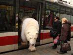 beruang_20170330_204209.jpg