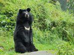 beruang_20170604_144041.jpg