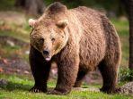 beruang_20180102_120639.jpg