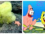 bintang-laut-dan-spons-laut-yang-ditemukan-cristopher-mah1.jpg
