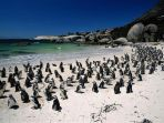 boulders-beach-afrika-selatan_20180331_111340.jpg