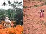 bunga-amarilis-mekar-di-gunungkidul.jpg