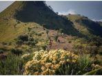 bunga-edelweis-di-gunung-merbabu.jpg