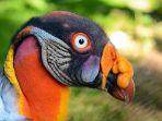 burung-menarik-di-dunia_20181024_081147.jpg