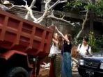 capture-video-viral-aksi-bule-cewek-bantu-angkat-pohon-di-bali.jpg