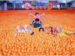 centrum-million-balls.jpg