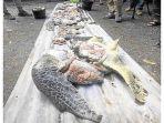 daging-pawikan-atau-penyu-hijau-yang-diperjualbelikan-di-pasar-ikan.jpg
