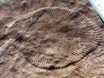 dickinsonia-fosil-binatang-paling-awal-di-muka-bumi_20181108_163224.jpg