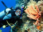 diving-di-indonesia_20170726_130019.jpg