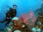 diving_20160801_173902.jpg