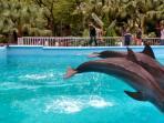 dolphin-bay_20161219_194138.jpg