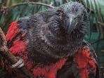 dracula-parrot.jpg