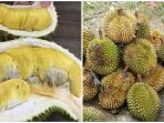 durian_20171126_155735.jpg