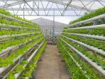 edufarm-di-greenhouse-lembah-indah-malang.jpg