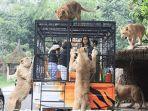 feline-feeding-adventure-di-taman-safari-bogor.jpg