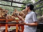 feline-feeding-adventure-taman-safari-bogor.jpg
