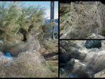 fenomena-jaring-laba-laba-via-mirror_20180924_174018.jpg