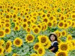 festival-bunga-matahari_20160815_150217.jpg