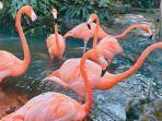 flamingo-di-jatim-park-2.jpg
