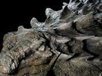 fosil-dinosaurus_20170523_210927.jpg