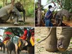 gajah-di-thailand_20180507_150358.jpg