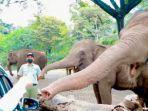 gajah-taman-safari-prigen-gambar.jpg