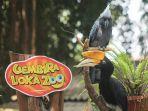 gembira-loka-zoo-yogyakarta.jpg