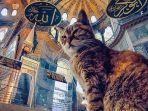 gli-kucing-di-hagia-sophia.jpg