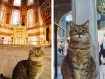 gli-kucing-yang-tinggal-di-dalam-hagia-sophia_20180818_204301.jpg