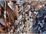 goosenecked-barnacles.jpg