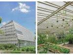 green-house-rumah-atsiri-indonesia-dari-dalam-dan-dari-luar-ruangan.jpg