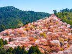 gunung-yoshino_20180403_083720.jpg