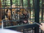 harga-tiket-carnivore-feeding-adventure-di-taman-safari-prigen.jpg