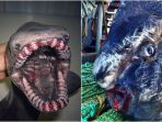 hewan-laut-yang-mengerikan_20171101_203514.jpg