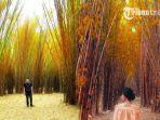 hutan-bambu-keputih_20171015_184053.jpg