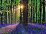 hutan-hallerbos-img.jpg