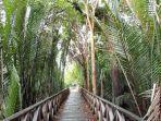 hutan-mangrove-kalltara.jpg