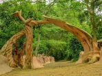 hutan-osun-osogbo-di-nigeria.jpg