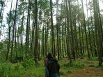 hutan-pinus-gunung-soputan_20181004_144901.jpg