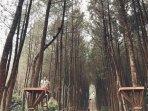 hutan-pinus-kragilan-2.jpg