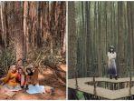 hutan-pinus-mangunan-dan-hutan-pinus-asri.jpg
