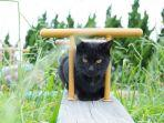 ilustrasi-kucing-di-tashirojima.jpg