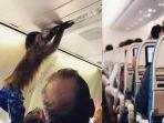 ilustrasi-monyet-di-dalam-kabin-pesawat.jpg