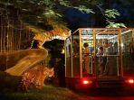 Wahana Safari Night Hadir Kembali di Bali Safari Park, Cek Harga Tiket dan Jadwalnya