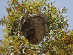 ilustrasi-sarang-tawon.jpg