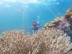 ilustrasi-wisatawan-berenang-di-pulau-badalu.jpg