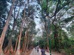 jalan-setapak-diapit-hutan-rindang-di-hutan-kota-ui.jpg